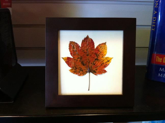 Diy how to frame autumn leaves the cash4books blog cash4books finally it is time to frame your art affordable frames can be obtained from garage sales local craft shops or even on craigslist solutioingenieria Gallery